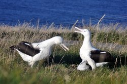 The Royal Albatross Centre