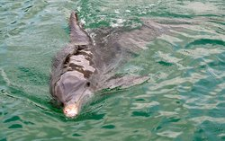 Florida Dolphin and Snorkel Tours