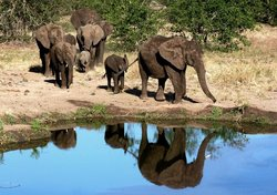 Elephants are dependant on water and in this image you see them coming down to drink water