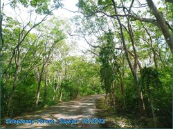 Salagdoong Forest Reserve