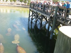 Tampa Electric's Manatee Viewing Center