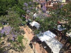 Pochote Xochimilco
