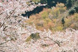 Hitoyoshi Pulm Garden