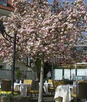 Hotel Reutemann-Seegarten Stolze-Spaeth Hotels
