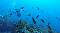 Natal Divers Centro de Mergulho