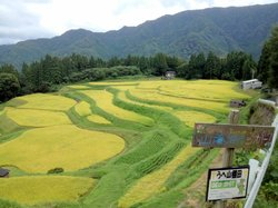 Rice terrace, Mt.Ue