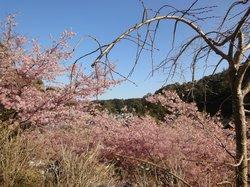 Kawamura Zuiken Park