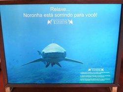 Shark Museum