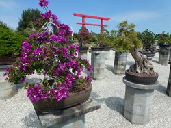 Wigert's Mango Grove & Bonsai Nursery