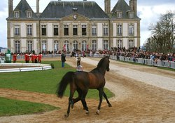 Haras National du Pin