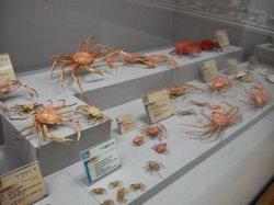Busan Marine Natural History Museum