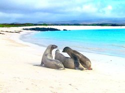 Galapagos Beach at Tortuga Bay