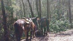 Horseshoe Creek Riding Stable
