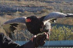 Burren Birds of Prey Centre