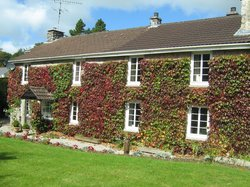 Ivy Cottage B & B