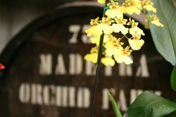 Madeira Orchid Farm