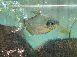 Aquarium Montecarlo