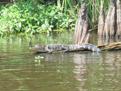 Torres Cajun Swamp Tours