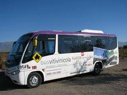 Bus Vitivinicola
