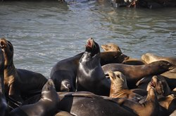 Sea Lion Center