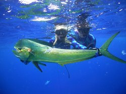 Blue Water Hunter Spearfishing Charters