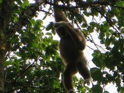 Sumatra Trekking