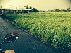 Nook paddy fields