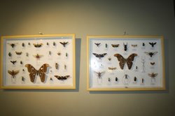 Wildlife Museum