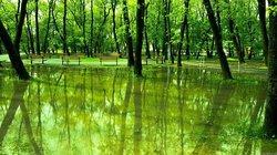 Crihala Natural Park