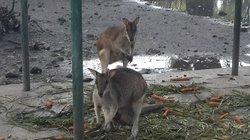 Surabaya's Zoo