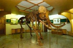 Zhytomyr Nature Museum