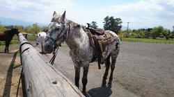 Kokopelli Western Riding