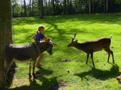 Paul Bunyan's Animal Land