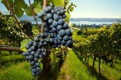 Ophorus Bordeaux Wine Day Tours