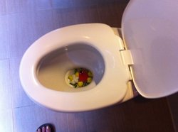 De bloemen in de toiletpot