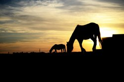 Wild horses in the sunset.....