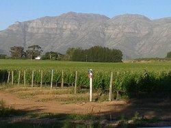 Eikendal Vineyards