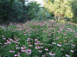 Maravel Garden