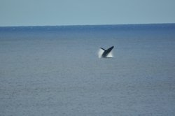 Whales can be seen from our lookout