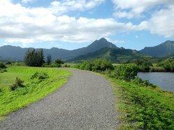 Kawai Nui Marsh自然保护区