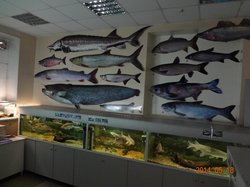 Fishes of Amur River Museum
