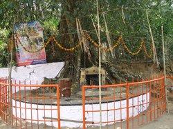 Chain Tree of Karinthandan