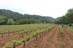 Domaine de Marie - Caveau Luberon/Provence