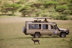 Safari Infinity - Day Tours