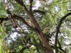 Canopy Climbers