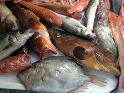 Officina del Pesce