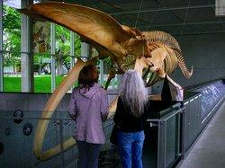 生物多样化博物馆