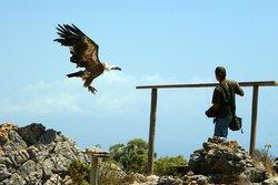 Garden of Eagles (Jardin de Las Aguilas)