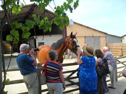 Brantome Police Horses & Friends