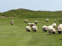 Whistling Straits Golf Course - Straits and Irish